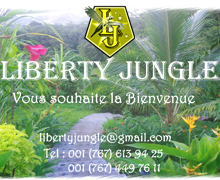 Liberty Jungle